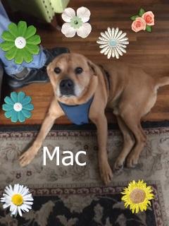 Handsome-Mac