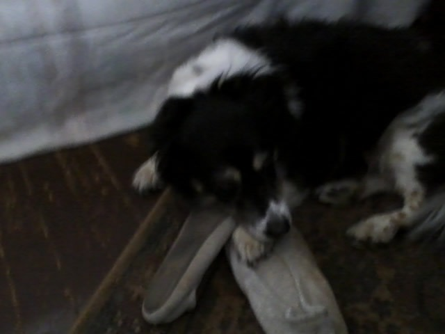 Murphy and my slippers-March-14