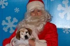 Daisy with Santa